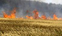 Constantine : 170 ha de céréales partis en fumée 9